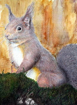 Red squirrel  of West Loch Awe by Jan Lowe