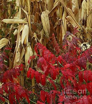 Red Stalker by J L Zarek