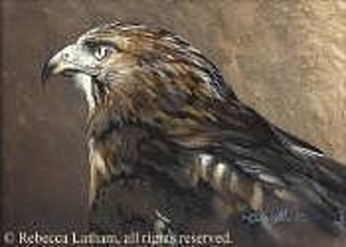 Red Tail Hawk Study by Rebecca Latham