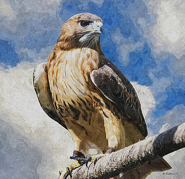 Red-Tailed Hawk - Oil Paint FX by Brian Wallace