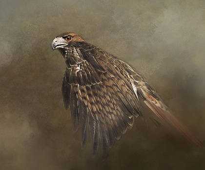 Red Tailed Hawk by Sue Fulton