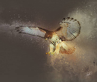 Red-tailed Hawk by Tom Schmidt