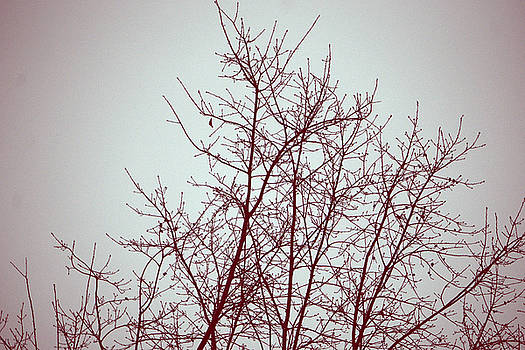 Red Tree by Kathy Barney