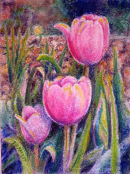 Red Tulip Trio by Bill Meeker