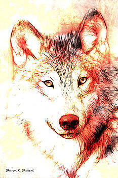 Red Wolf Portrait by Sharon K Shubert