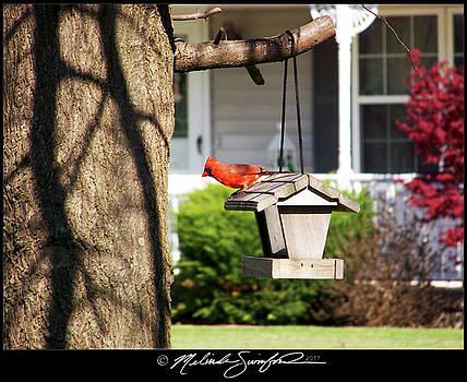 Redbird Perch by Melinda Swinford