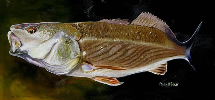 Redfish Study  by Phyllis Beiser