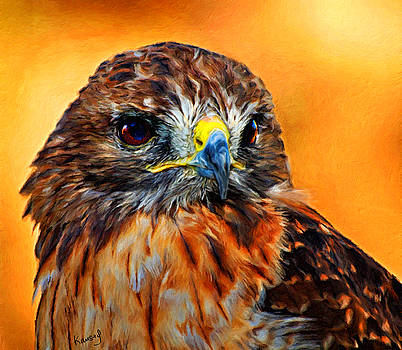 Redtailed hawk by Johanne Dauphinais