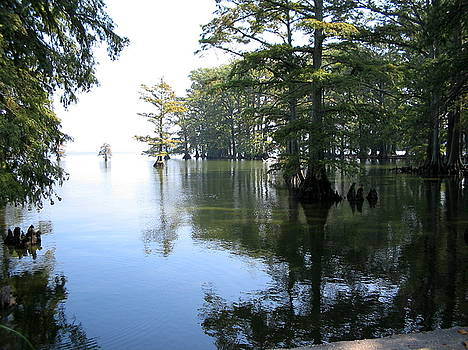 Reelfoot Reflection by CGHepburn Scenic Photos