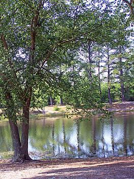 Patricia Taylor - Reflecting Pond