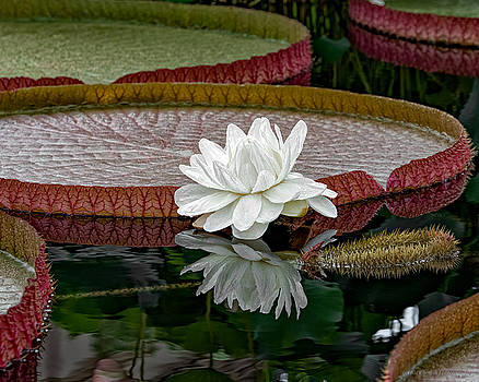 Reflecting Pond by Phil Abrams