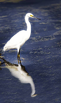 Reflection of the Egret by David Millenheft