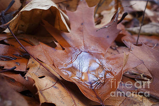 Reflection on Fallen Leaf by Jonathan Welch
