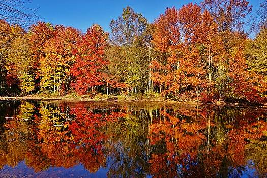 Reflections in Autumn by Ed Sweeney