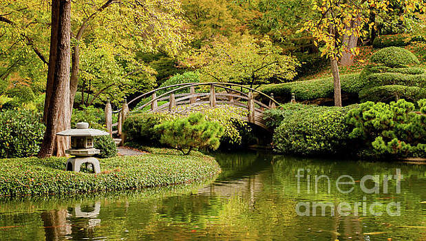 Reflections in the Japanese Garden by Iris Greenwell