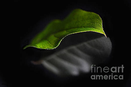 Reflections Of A Leaf by Dan Holm