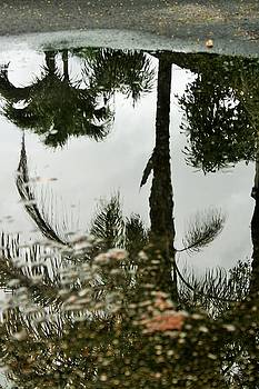Reflections on a Rainy Day by Ruthann Carlson
