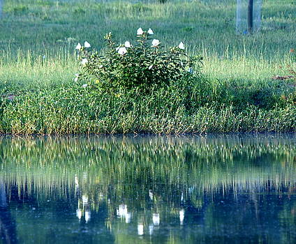 Reflections on the pond by Danny Jones