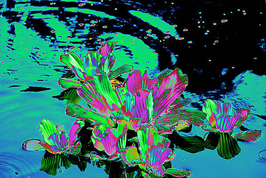 Reflexion of Floating Flowers by Don Wright
