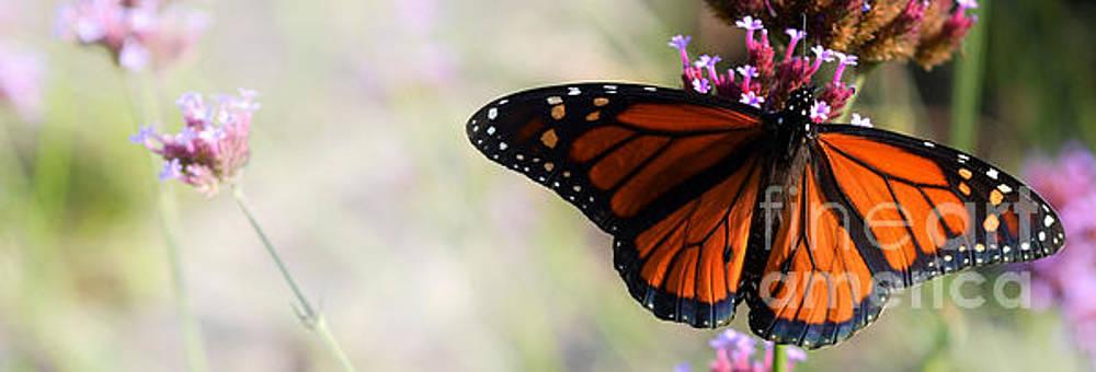 Regal Monarch  by Elaine Manley