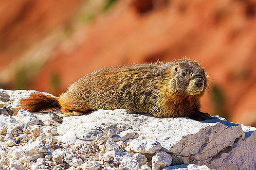 Relaxing On The Chasm  by James Marvin Phelps