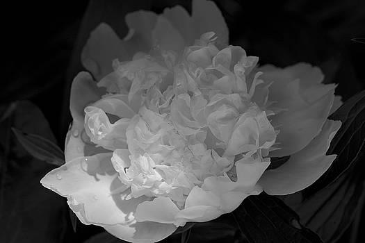 Remembrance by Jane Eleanor Nicholas