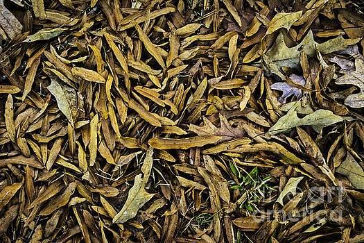 Remnants of Fall  by JW Hanley
