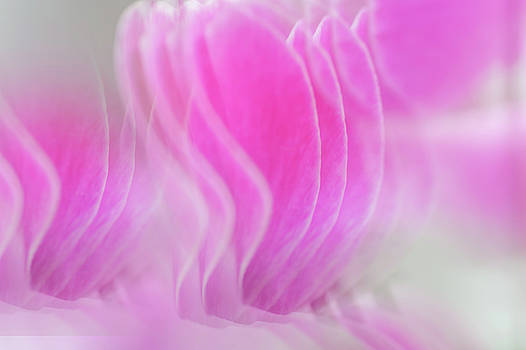 Jenny Rainbow - Repeating Beauty