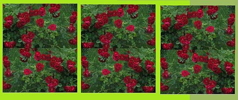 Repeating Roses by Rosemary Mazzulla