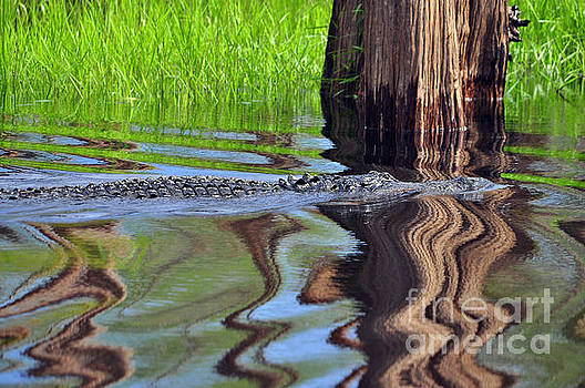 Reptile Ripples by Al Powell Photography USA