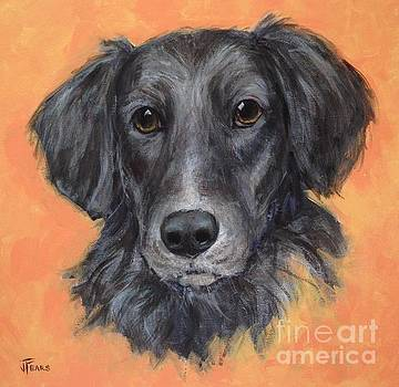 Rescue Dog by Vickie Fears
