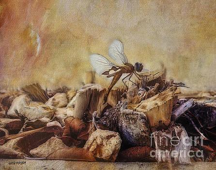 Rhonda Strickland - Respite of the Mosquito Hawk