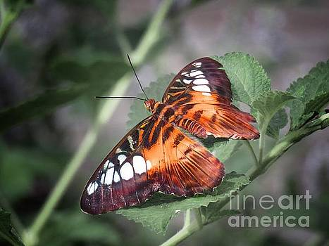 Resting butterfly by Rrrose Pix