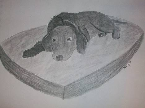 Resting Dog by Kristen Hurley
