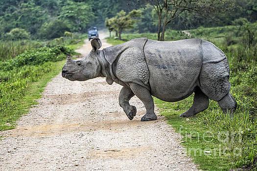 Rhino Crossing by Pravine Chester
