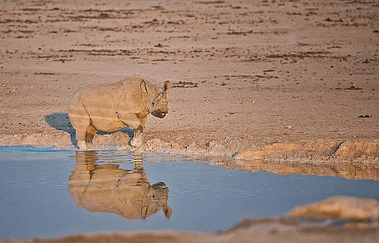 Rhino Reflection by Sandy Schepis