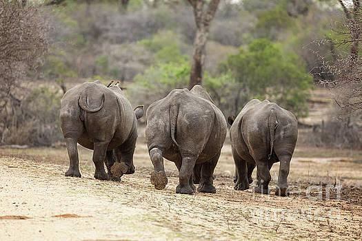 Rhino trio by Jane Rix