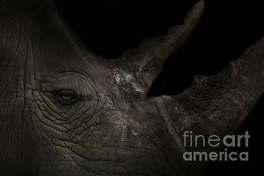 Rhinoceros by Lynn Jackson