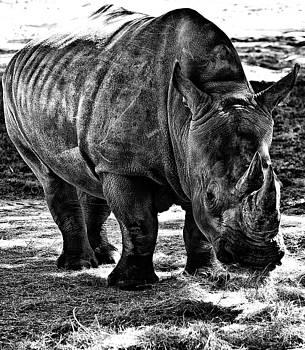Rhinoplasty by Sarita Rampersad