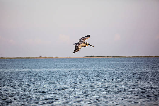 Riding the Breeze Over the Gulf Waters by Scott Pellegrin