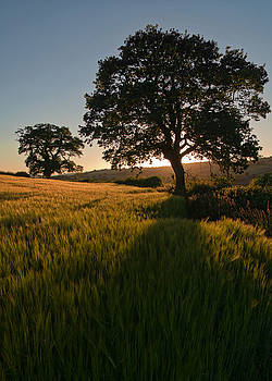Ripe harvest at the end of the day by Pete Hemington