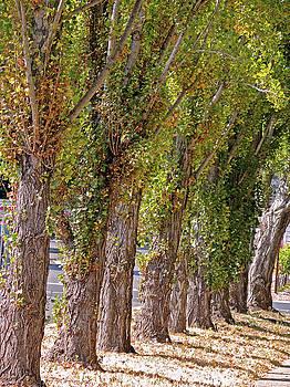 Lynda Lehmann - Rise of Trees
