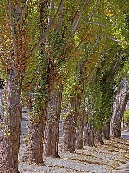 Lynda Lehmann - Rise of Trees, Napa Valley