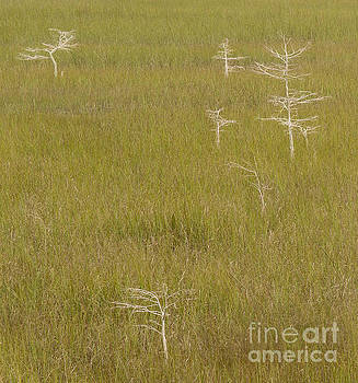 River of Grass 1a by Tracy Knauer
