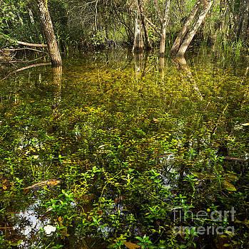 River of Grass by Matt Tilghman