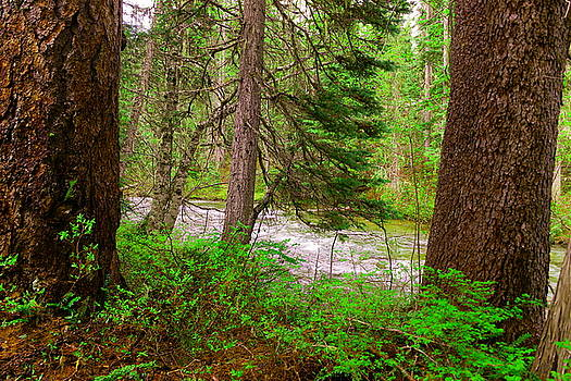 River through the forest by Jeff Swan