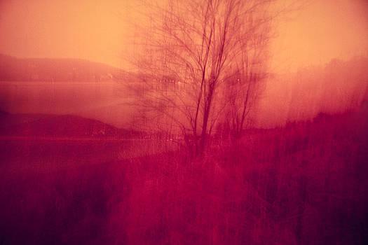 River Valley Tree by Dorit Fuhg