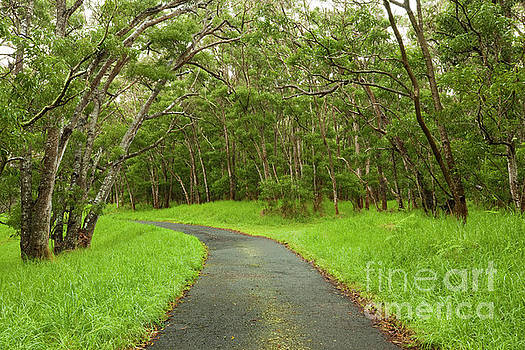 Road through Koa Tree Forest by Charmian Vistaunet