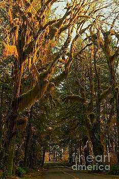 Adam Jewell - Road To The Hoh Rainforest