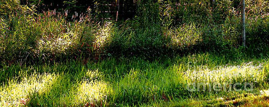 Roadside Green Palette in Sunlight by Charlie Spear